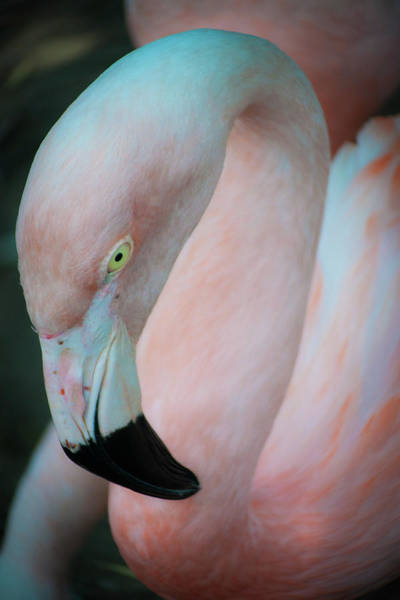 Photograph - Pink by Stewart Helberg