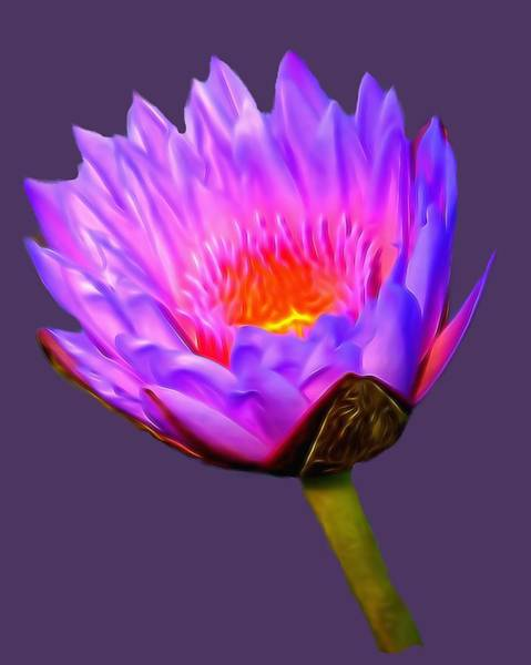 Mixed Media - Pink Water Lily by Pamela Walton