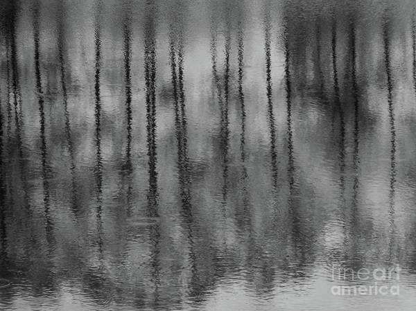 Photograph - Pondpoland by Mary Kobet