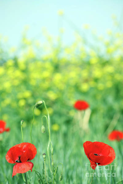 Wall Art - Photograph - Poppies Flower Meadow Spring Season by Goce Risteski