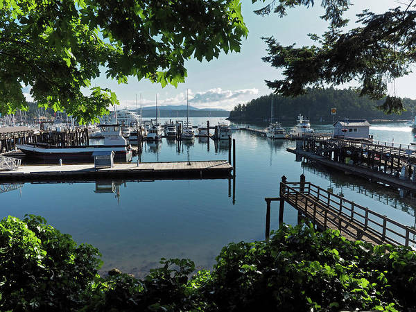 Wall Art - Photograph - Port Of Friday Harbor Marina by Stephanie McDowell
