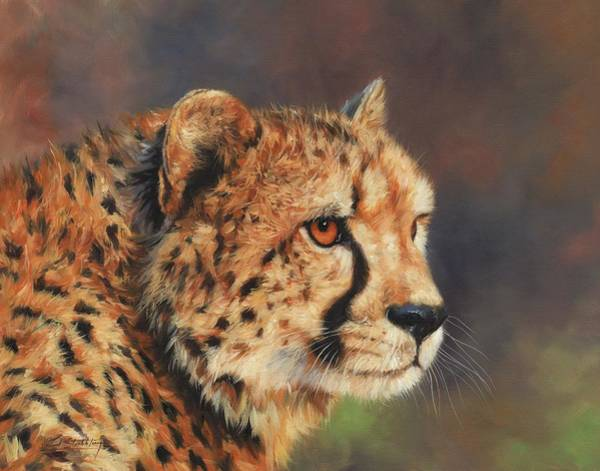 Cheetah Painting - Portrait Of A Cheetah by David Stribbling
