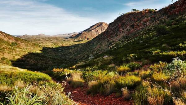Photograph - Pound Track - Ormiston Gorge by Lexa Harpell