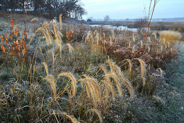 Photograph - Prairie Grasses In Glacial Park by Ray Mathis