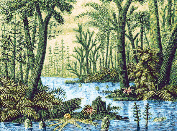 Photograph - Prehistoric Flora, Carboniferous Period by Science Source