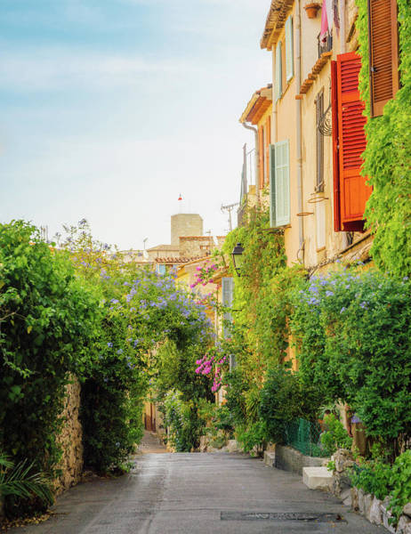 Photograph - Provencal Background by Alexandre Rotenberg