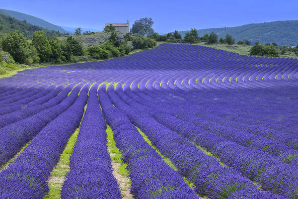 Wall Art - Photograph - Provence by Christian Heeb