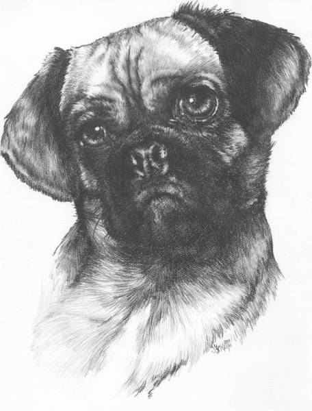 Mutt Drawing - Puggle by Barbara Keith