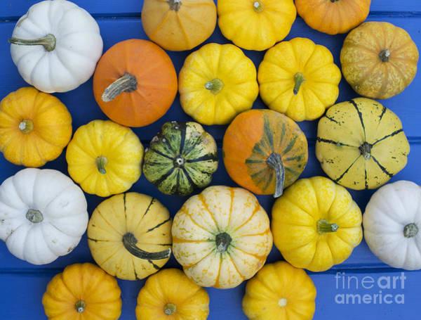 Cucurbita Wall Art - Photograph - Pumpkin Pattern by Tim Gainey