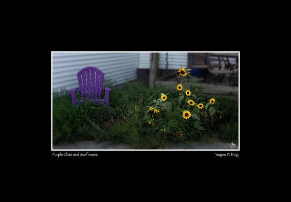 Photograph - Purple Chair And Sunflowers by Wayne King