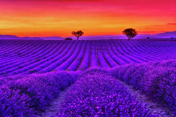 Wall Art - Photograph - Purple Love by Midori Chan