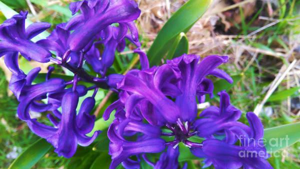 Photograph - Purple Majesty 2 by Robert Knight