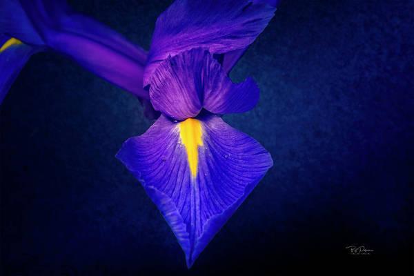 Photograph - Purple Petals by Bill Posner