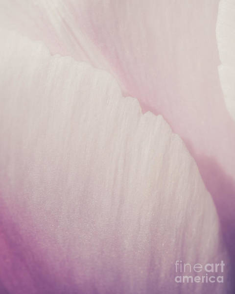 Wall Art - Photograph - Purple Petals by Lucid Mood