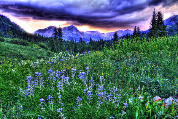 Wall Art - Photograph - Purple Skies And Wildflowers by Scott Mahon