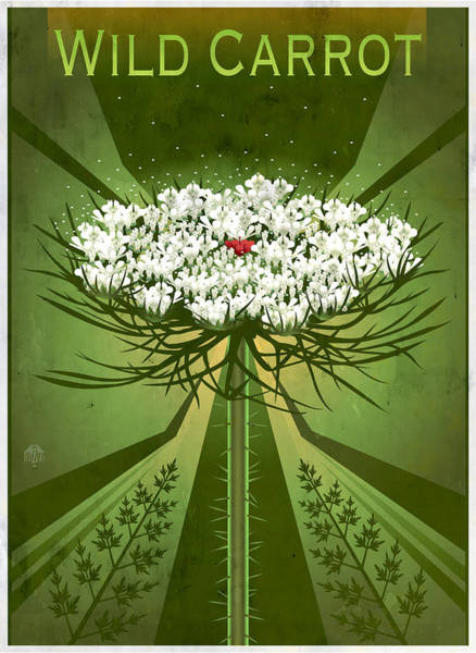 Lace Painting - Queen Anne's Lace Floral Art by Garth Glazier