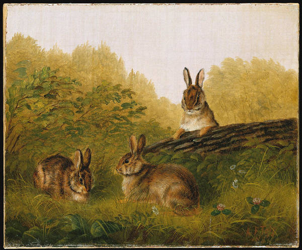Wall Art - Painting - Rabbits On A Log by Arthur Fitzwilliam Tait