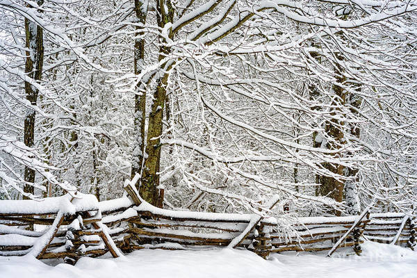 Photograph - Rail Fence And Snow by Thomas R Fletcher