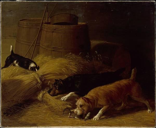 Barley Painting - Rats Amongst The Barley Sheaves by Thomas Hewes Hinckley