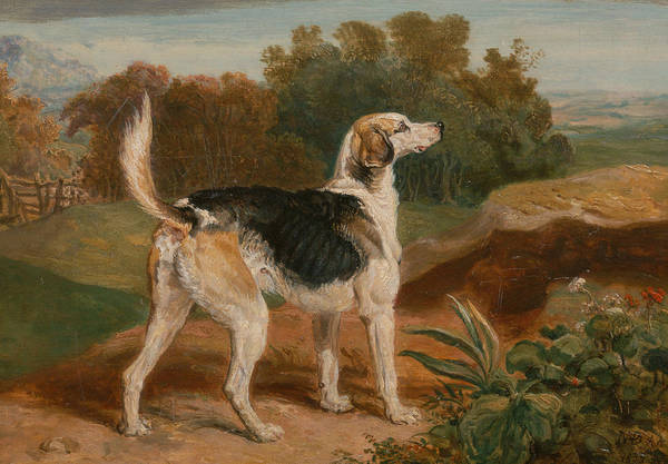 Ward Painting - Ravager, One Of The Lambton Hounds by James Ward
