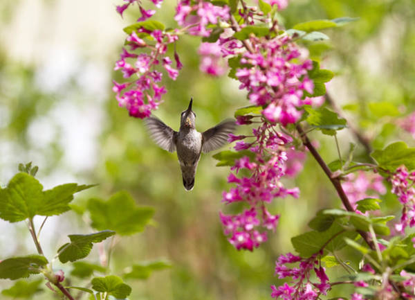 Small Birds Photograph - Reach For It by Rebecca Cozart