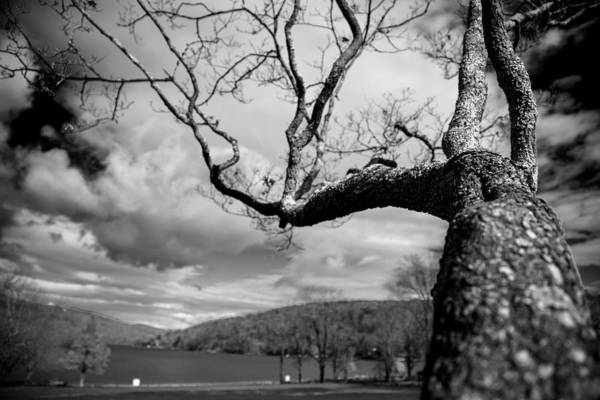 Fairfield Ct Photograph - Reaching by Karol Livote
