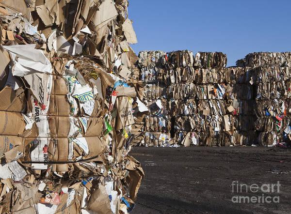 Wall Art - Photograph - Recycling Facility by Paul Edmondson