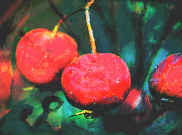 Wall Art - Digital Art - Red Apples by Susan Stone