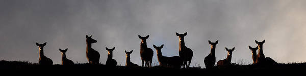 Photograph - Red Deer On The Hill by Gavin MacRae