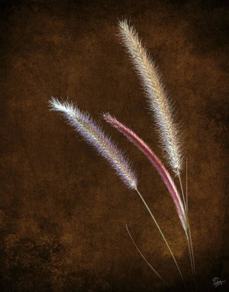 Photograph - Red Fountain Grass by Endre Balogh