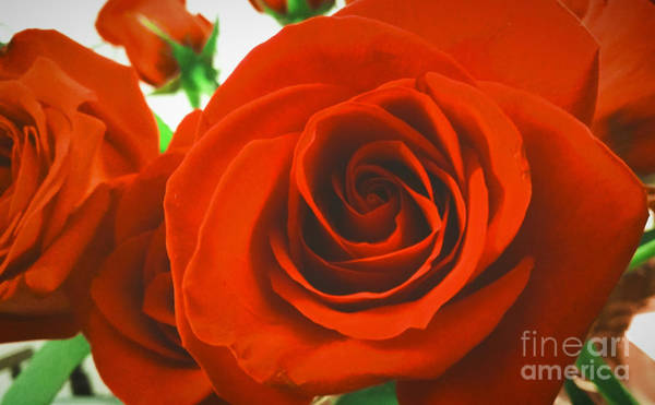 Photograph - Red Love by Robert Knight