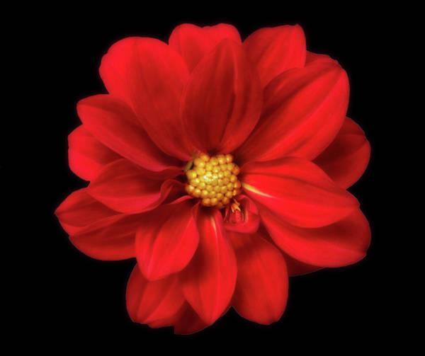 Greetingcards Photograph - Red Summer Memory 2 by Johanna Hurmerinta