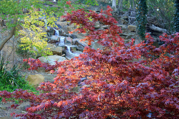 Honor Heights Park Photograph - Red Tree And Waterfall by Carolyn Fletcher