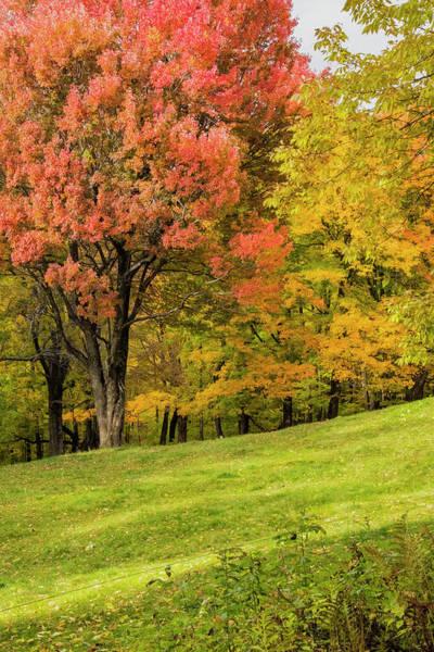 Photograph - Red Tree by Tom Singleton