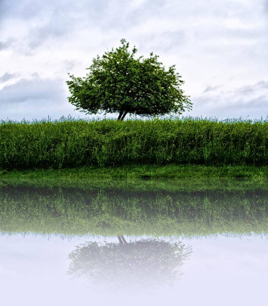 Wall Art - Photograph - Reflecting Tree by Bill Cannon