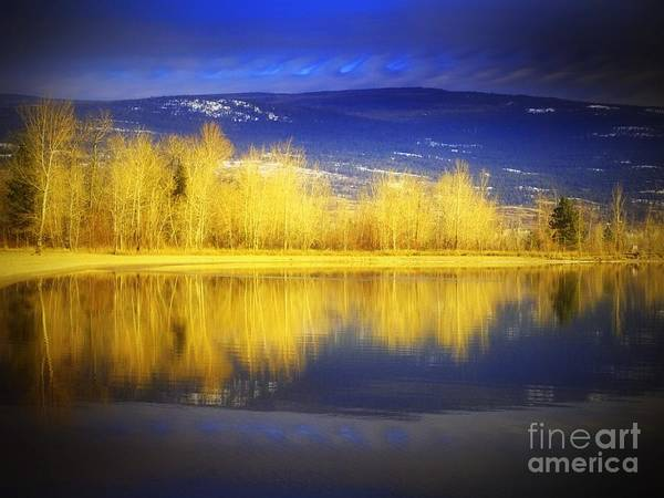 Photograph - Reflections In Gold by Tara Turner
