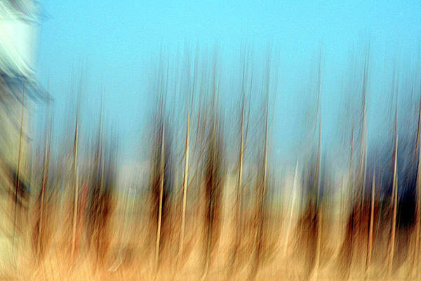 Wall Art - Photograph - Regularity by Robert Shahbazi