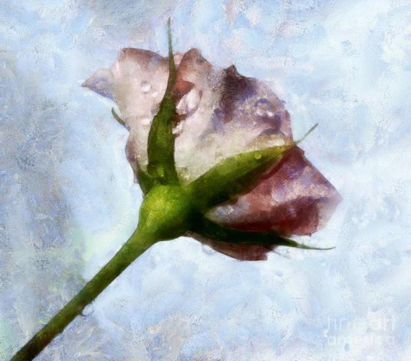 Garden Roses Digital Art - Remembering You by Krissy Katsimbras