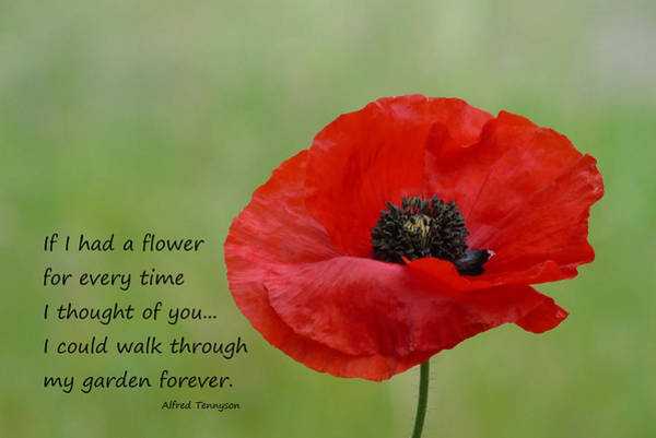 Photograph - Remembrance Poppy by Barbara St Jean