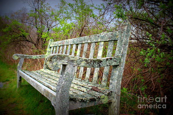 Wall Art - Photograph - Rest Awhile by Hanni Stoklosa