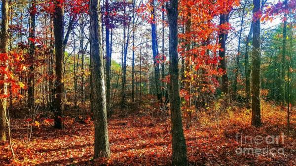 Photograph - Rewards Of Autumn by Rachel Hannah