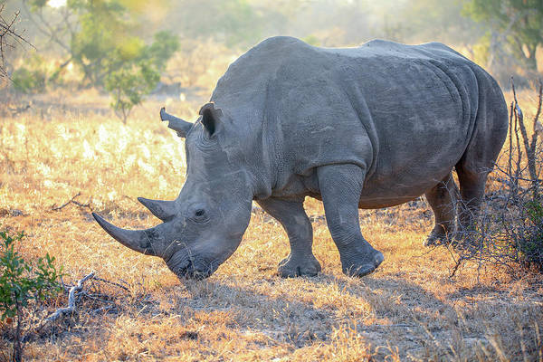 Wall Art - Photograph - Rhino by Paul Fell