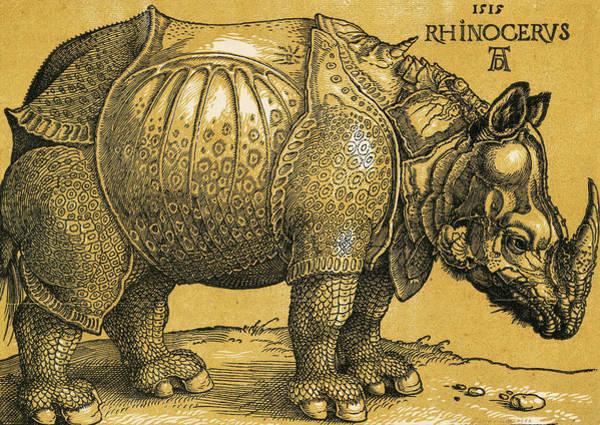 Albrecht Durer Wall Art - Painting - Rhinoceros by Albrecht Durer