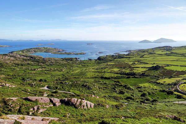 Lamb Photograph - Ring Of Kerry - Ireland by Joana Kruse
