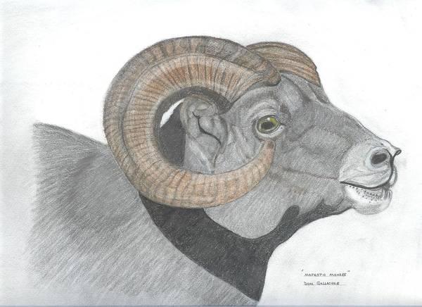 Elk Mountain Drawing - Rocky Mountain Sheep by Don  Gallacher