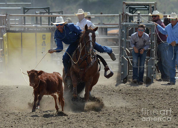 Wall Art - Photograph - Rodeo Calf Roping 2 by Bob Christopher
