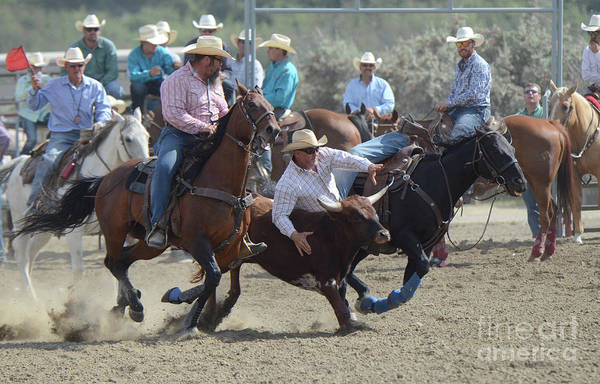 Wall Art - Photograph - Rodeo Steer Wrestling 2 by Bob Christopher