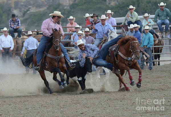 Wall Art - Photograph - Rodeo Steer Wrestling 3 by Bob Christopher