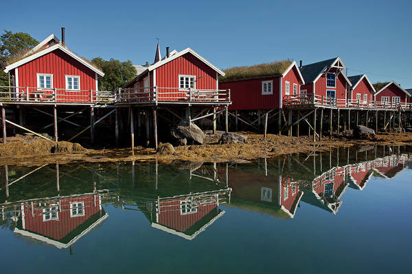 Photograph - Rorbus And Reflections In Reine by Aivar Mikko