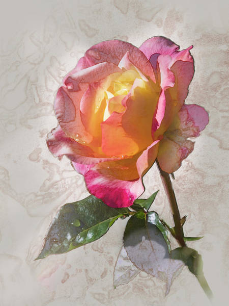 Digital Art - Rosa, 'glowing Peace' by Mark Mille